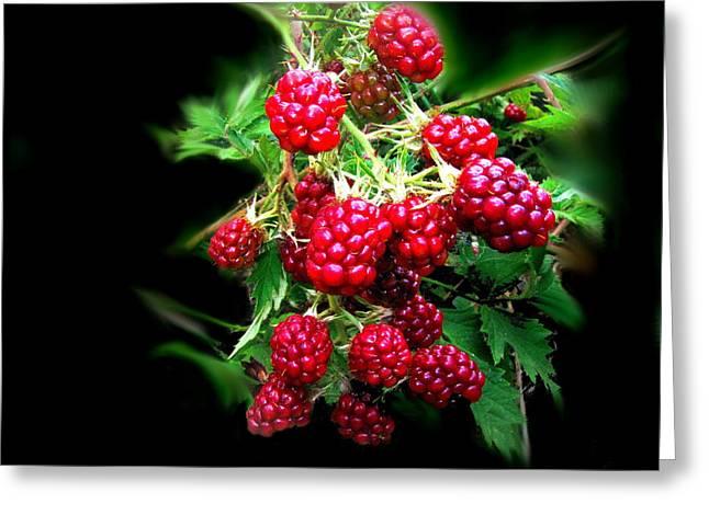 Numbers Plus Photography Digital Greeting Cards - Wild Blackberries 2 Greeting Card by Joyce Dickens