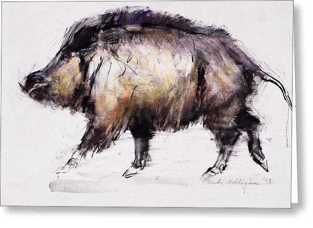Su Greeting Cards - Wild Boar, 1999 Graphite, Conte And Charcoal On Paper Greeting Card by Mark Adlington