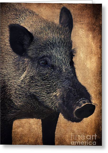 Mammal Mixed Media Greeting Cards - Wild boar  Greeting Card by Angela Doelling AD DESIGN Photo and PhotoArt