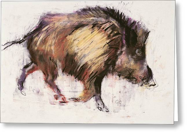 Tusk Greeting Cards - Wild Boar Trotting, 1999 Graphite, Conte And Charcoal On Paper Greeting Card by Mark Adlington
