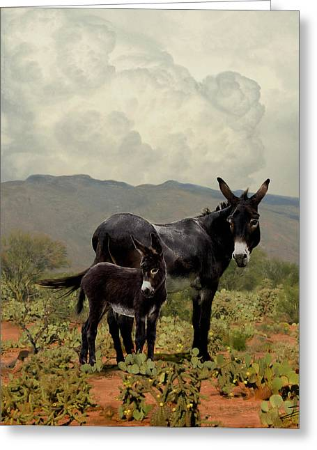 Burros Greeting Cards - Wild Burros of Tucson Greeting Card by Schwartz