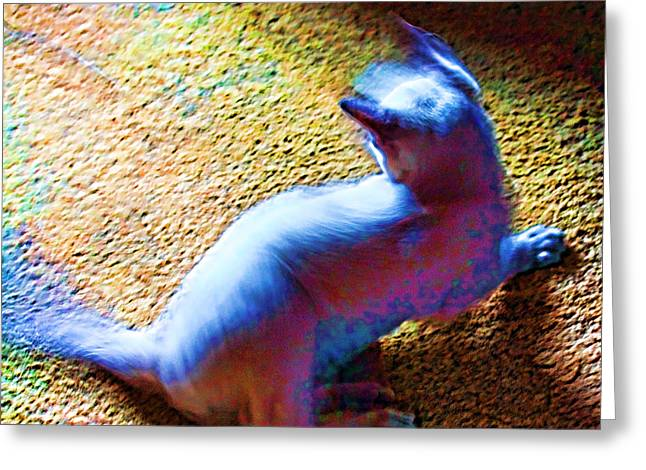 Playing Digital Greeting Cards - Wild Cat Greeting Card by Linda Phelps
