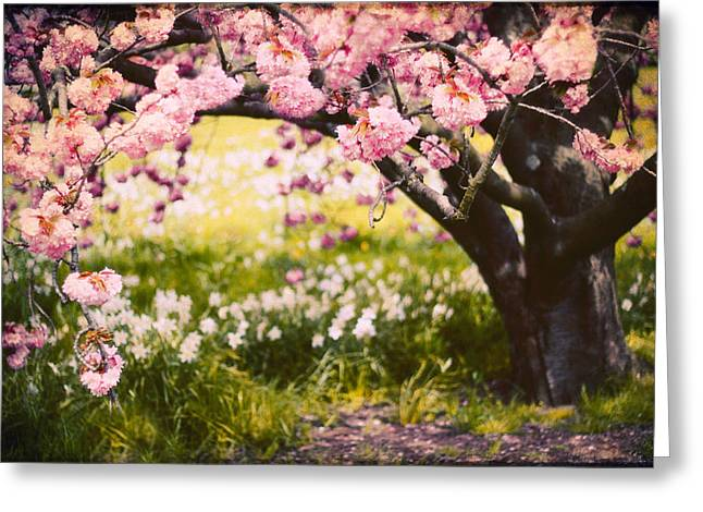 Orchard Greeting Cards - Wild Cherry Greeting Card by Jessica Jenney