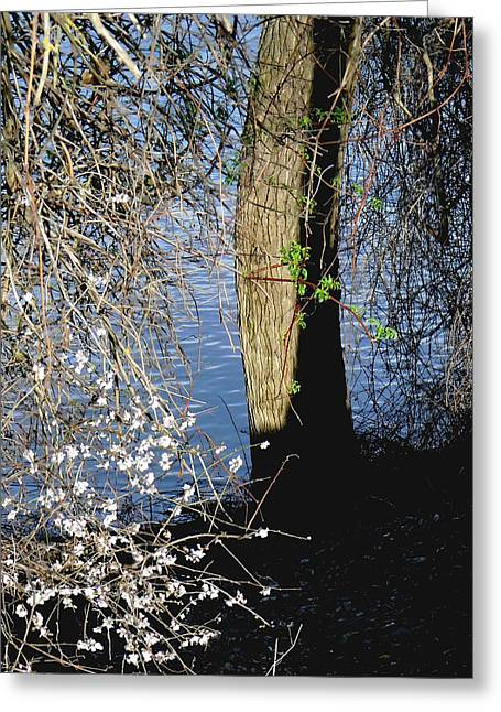 Spring Greening Greeting Cards - Wild Cherry Tree on the Sacramento River  Greeting Card by Pamela Patch