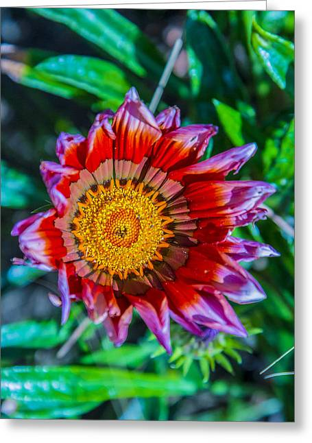 Best Flower Images Greeting Cards - Wild Child Greeting Card by Cj Avery