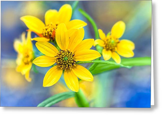 Wild Confederate Daisies On Arabia Mountain - North Georgia Greeting Card by Mark Tisdale