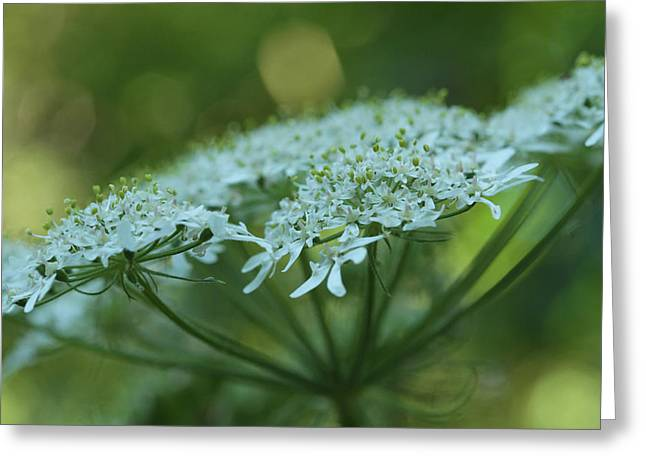 Culinary Greeting Cards - In Natures Green Garden Greeting Card by Connie Handscomb