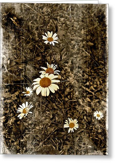 Wild Daisies Greeting Card by Bellesouth Studio