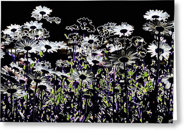 Wild Daisies II Greeting Card by David Patterson