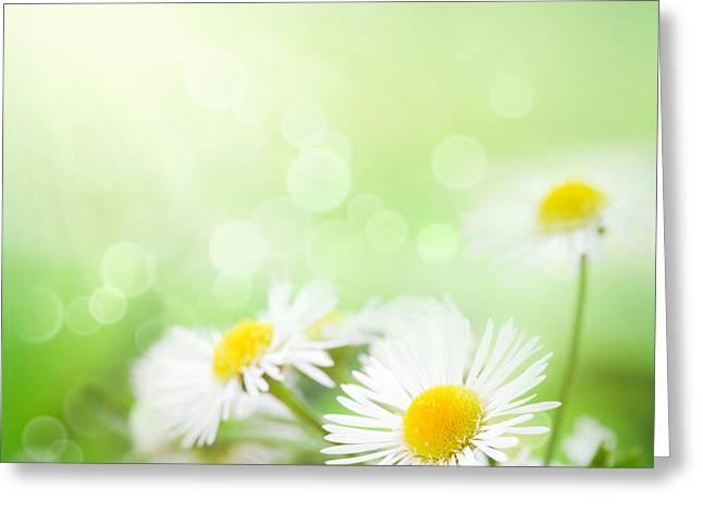 Mythja Digital Art Greeting Cards - Wild daisies Greeting Card by Mythja  Photography