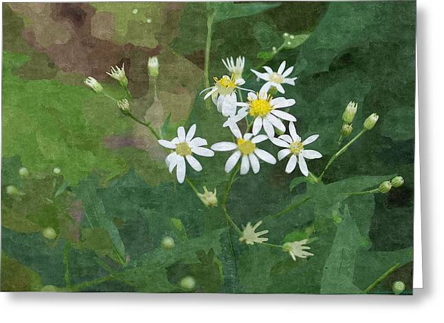 Entryway Drawings Greeting Cards - Wild Daisys  Greeting Card by Rosemarie E Seppala