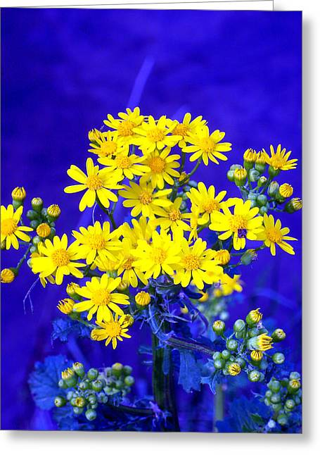 """flower Still Life Prints"" Greeting Cards - Wild Dasies on Purple Greeting Card by B L Hickman"