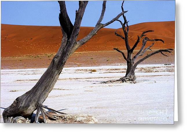 Most Favorite Photographs Greeting Cards - Wild Dead Vlei Greeting Card by Noa Yerushalmi