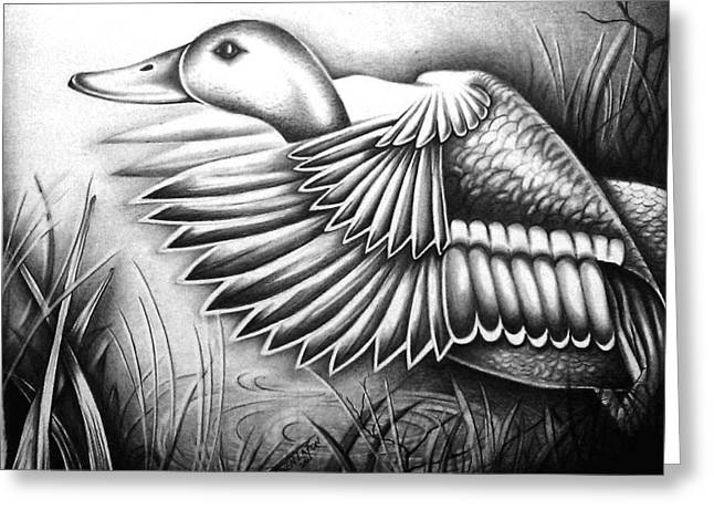 Wild Life Drawings Greeting Cards - Wild Duck Greeting Card by Owen Lafon