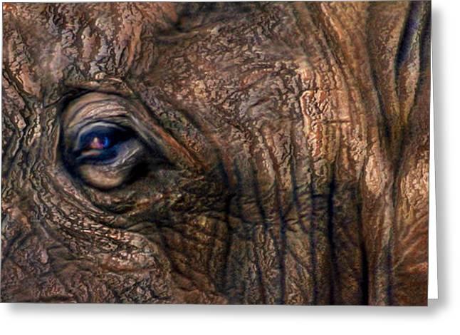 Elephants Eye Greeting Cards - Wild Eyes - African Elephant Greeting Card by Carol Cavalaris