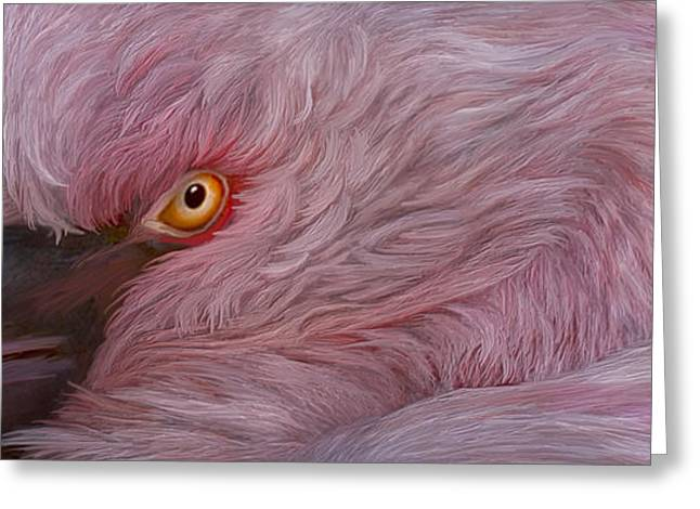 Flamingo Art Greeting Cards - Wild Eyes - Flamingo Greeting Card by Carol Cavalaris