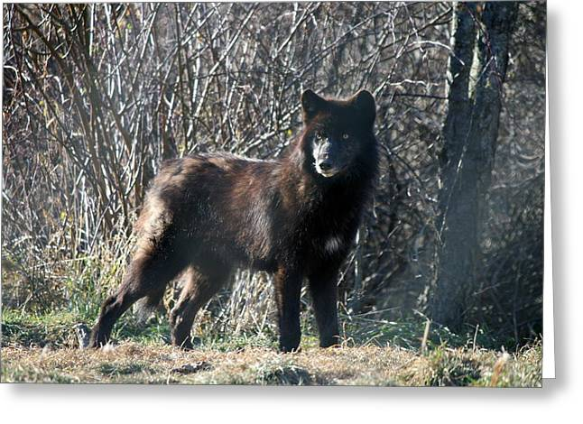 Beauty Greeting Cards - Wild Eyes  Greeting Card by Neal  Eslinger