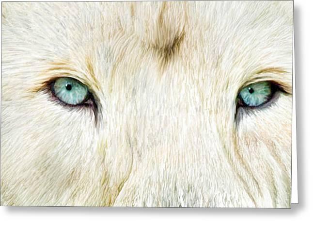Wild Eyes - White Lion Greeting Card by Carol Cavalaris