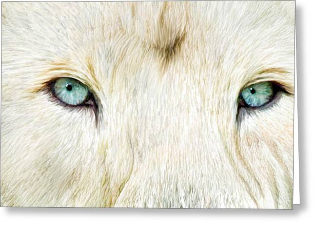 Lions Greeting Cards - Wild Eyes - White Lion Greeting Card by Carol Cavalaris