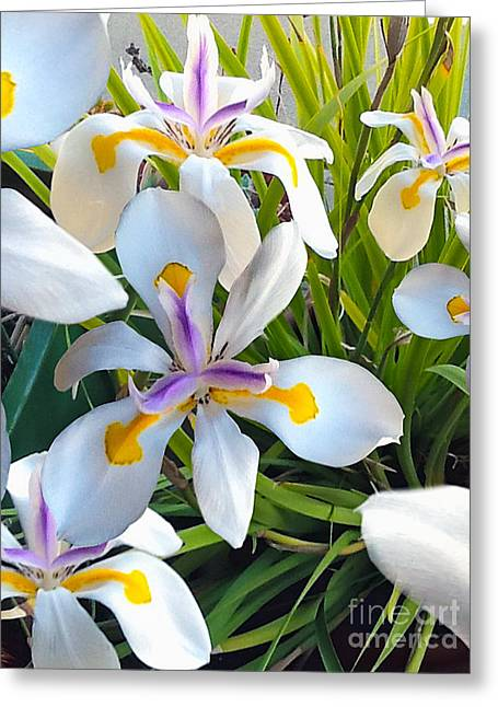 Purple Tapestries - Textiles Greeting Cards - Wild Fairy Iris Patch Greeting Card by John Castell