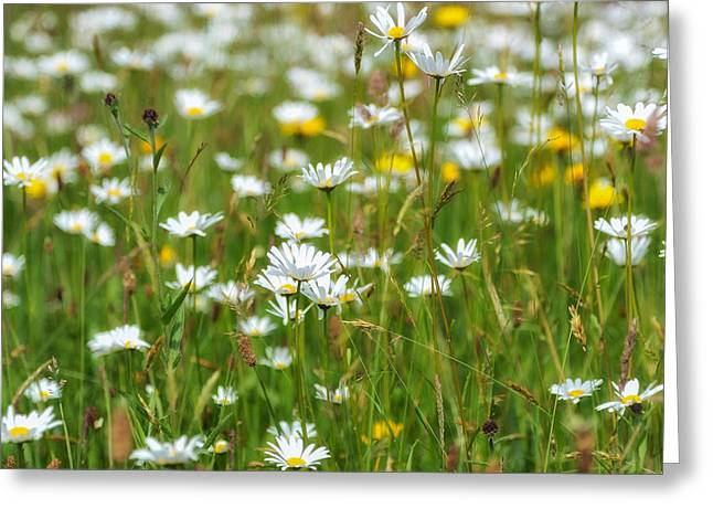 Flora And Fauna Greeting Cards - Wild Flower Meadow Greeting Card by Janet Burdon