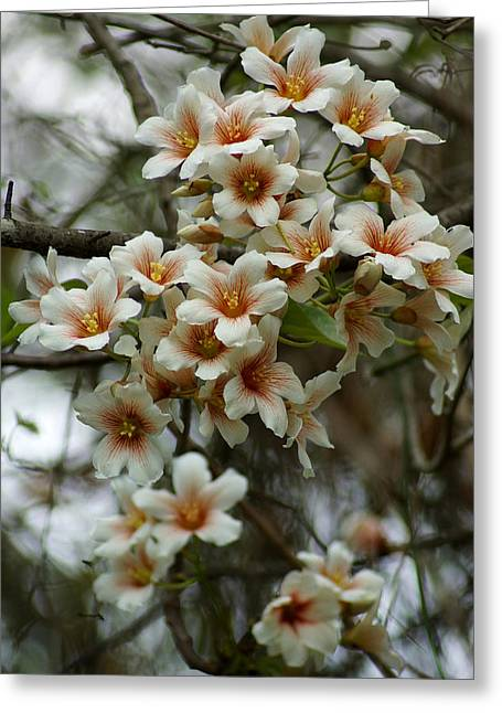 Wild Flowering Beauty Greeting Card by Kim Pate