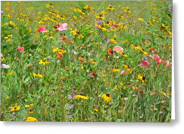 Cultivation Paintings Greeting Cards - Wild flowers 1 Greeting Card by Lanjee Chee