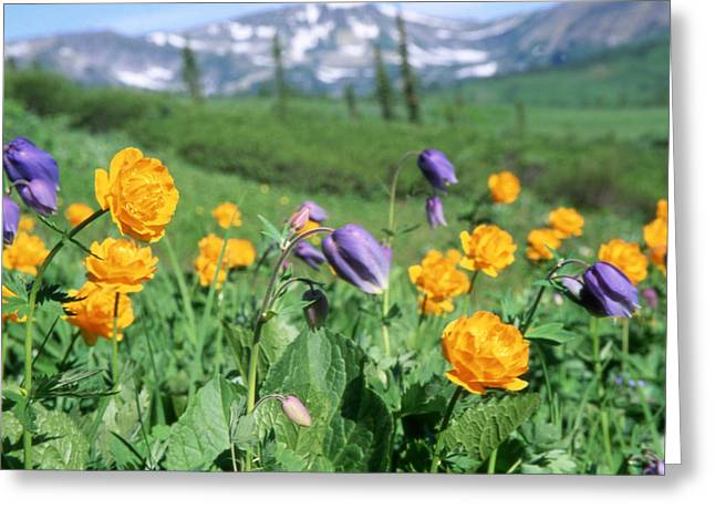 Flora Photography Greeting Cards - Wild Flowers Greeting Card by Anonymous