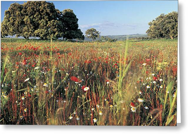 Andalucia Greeting Cards - Wild Flowers In A Field, Andalucia Greeting Card by Panoramic Images