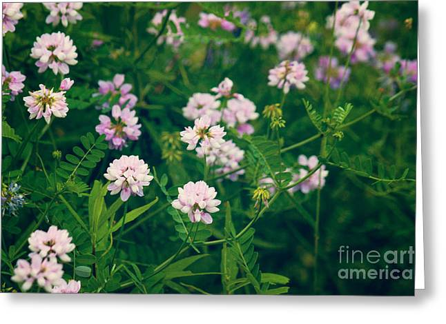 Vetch Greeting Cards - Wild Flowers Greeting Card by Lena Auxier
