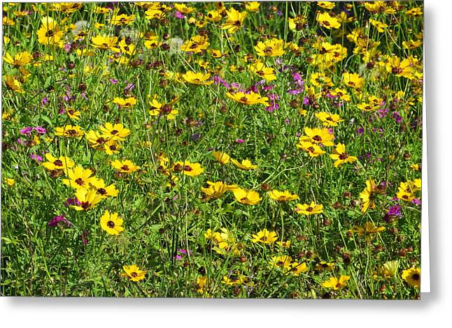 Tall Daises Greeting Cards - Wild Flowers Greeting Card by Tim Townsend