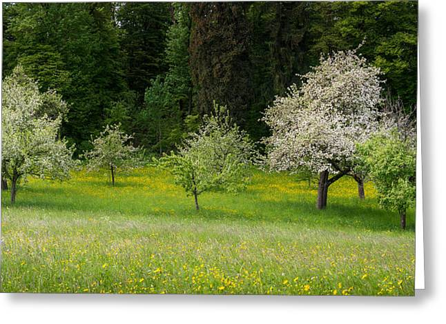 Organic Greeting Cards - Wild Flowers With Blossoming Apple Greeting Card by Panoramic Images