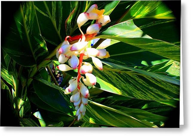 Gift Tapestries - Textiles Greeting Cards - Wild Ginger Greeting Card by Kevin Perandis