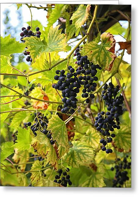 Wild Orchards Photographs Greeting Cards - Wild Grapes Greeting Card by Michael Hope