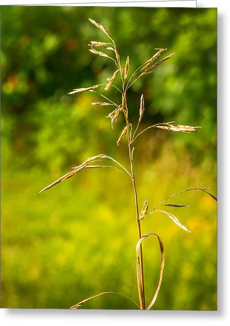 Golden Summer Grass Greeting Cards - Wild Grass 3 Greeting Card by Steve Harrington