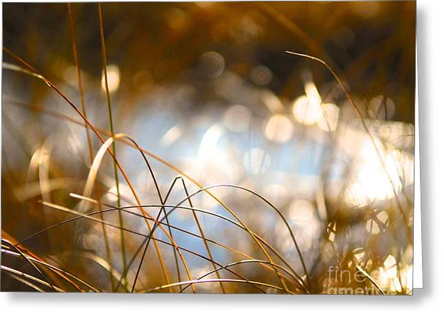 Princes Greeting Cards - Wild Grass on the Marsh Greeting Card by Mike Moyer