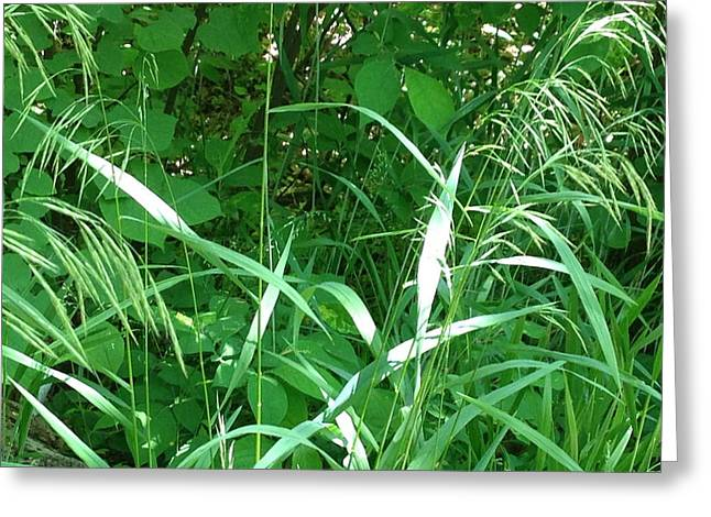 Wild Grass Greeting Card by Ron Torborg