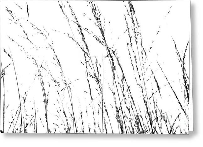 Natalie Kinnear Greeting Cards - Wild Grasses Abstract Greeting Card by Natalie Kinnear