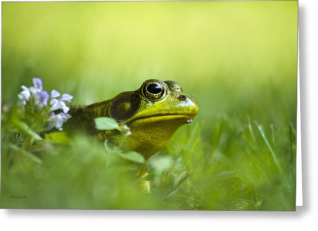 Wild Green Frog Greeting Card by Christina Rollo
