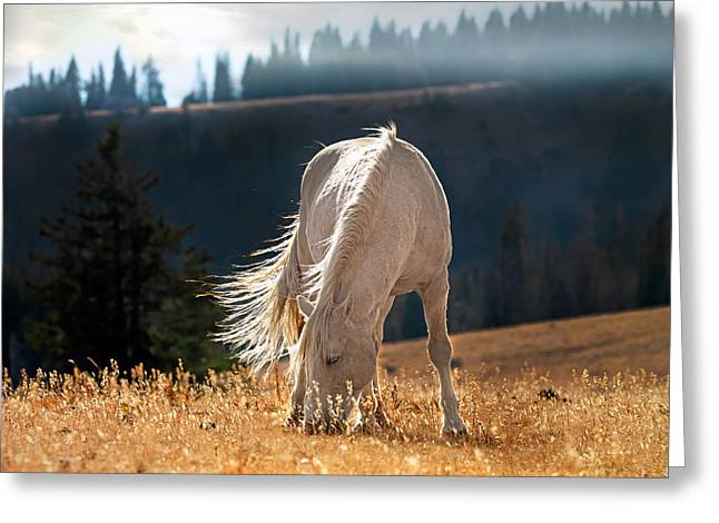 Wild Horse Cloud Greeting Card by Leland D Howard