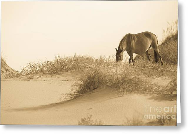 Wild Horse Photographs Greeting Cards - Wild Horse Greeting Card by Diane Diederich