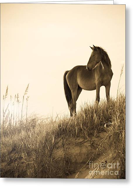 Wild Horse Greeting Cards - Wild Horse on the Beach Greeting Card by Diane Diederich