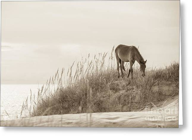 Wild Horse Greeting Cards - Wild Horse on the Outer Banks Greeting Card by Diane Diederich