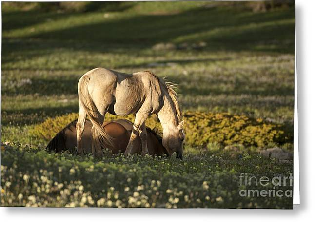Wild Horses-animals-image-18 Greeting Card by Wildlife Fine Art