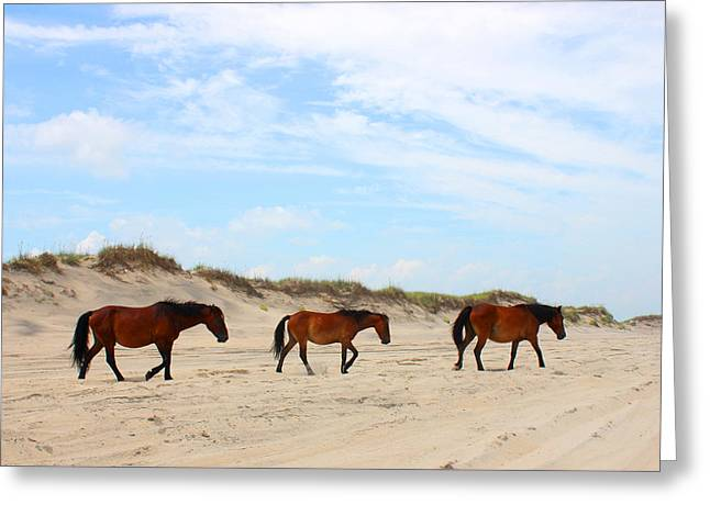 Carolina Mixed Media Greeting Cards - Wild Horses of Corolla - Outer Banks OBX Greeting Card by Design Turnpike