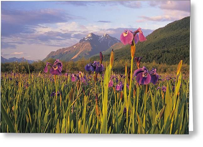 Matanuska Greeting Cards - Wild Iris Blooming In Front Of Pioneer Greeting Card by Jim Barr