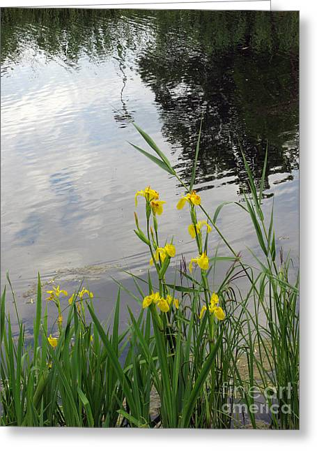 Wildlife Celebration Greeting Cards - Wild Iris By The Pond Greeting Card by Ausra Paulauskaite