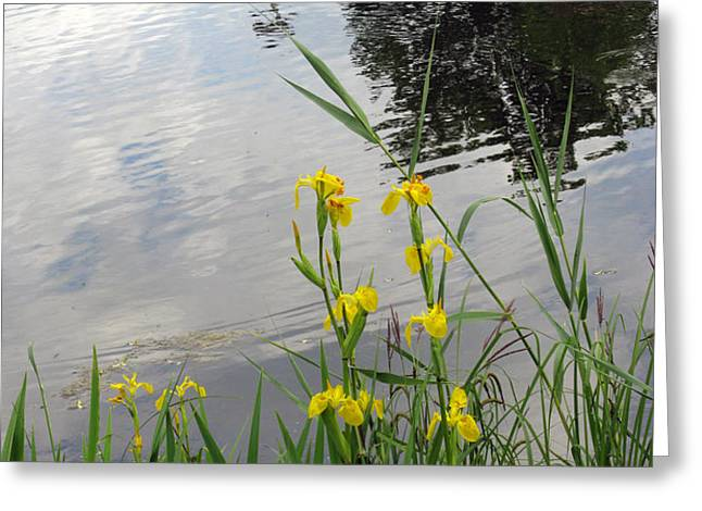 Wild Iris By The Pond Greeting Card by Ausra Paulauskaite