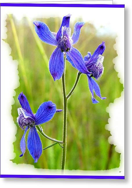 Larkspur Greeting Cards - Wild Larkspurs Greeting Card by Will Borden