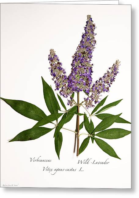 Agnus Greeting Cards - Wild-Lavender 1 Greeting Card by Roberta Jean Smith